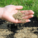 Best Grass Seed for Florida