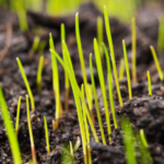 How Long Grass Seed Take to Germinate?