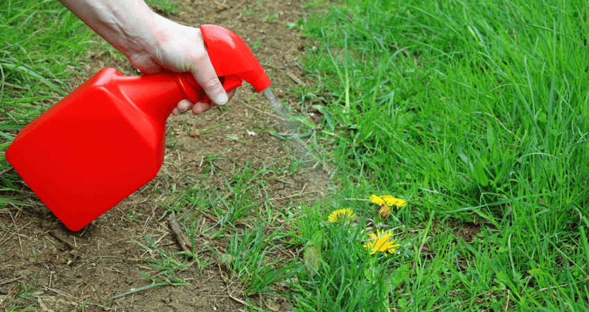 Weed and Feed for Southern Lawns