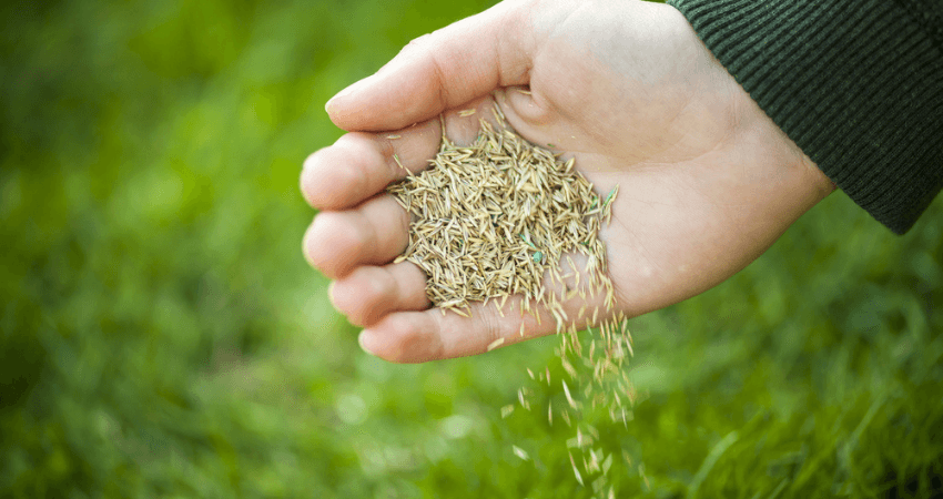 Grass Seed For Colorado