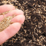 Best Grass Seed For Maryland