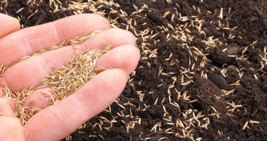 Grass Seed For Maryland
