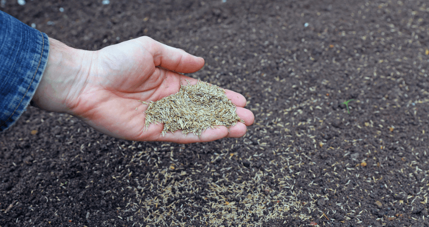 Grass Seed For Missouri