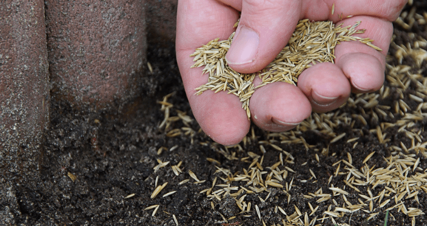 Grass Seed For New England