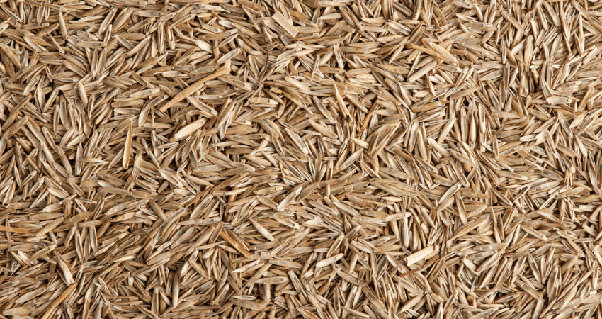 Grass Seed For Northeast