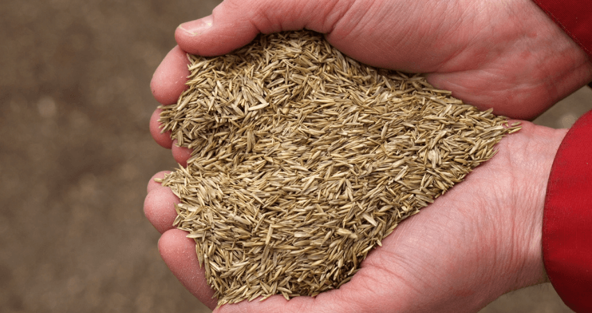 Grass Seed For Southern California