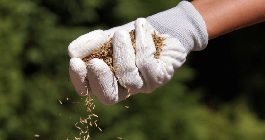 Grass Seed For Virginia