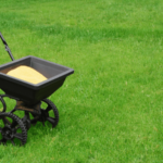 Best Time To Fertilize Lawn Before or After The Rain!