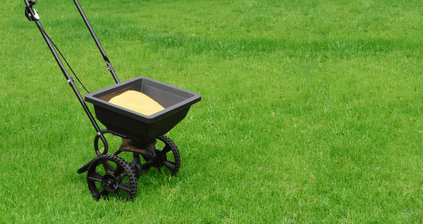 Time To Fertilize Lawn Before or After The Rain