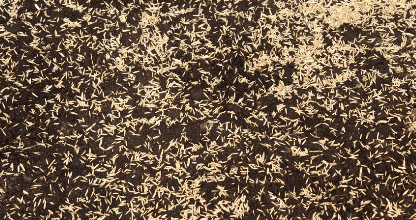 Grass Seed Per Acre
