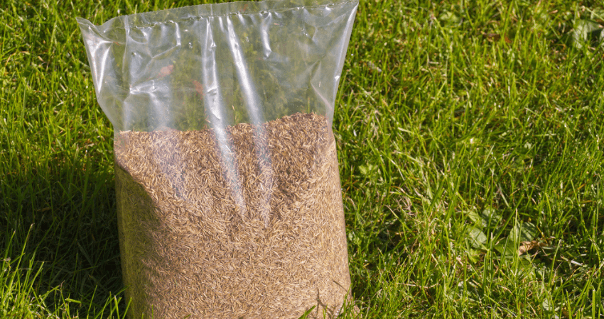 How long is grass seed stored for