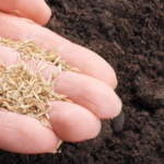 How To Plant Grass Seed On Hard Dirt?