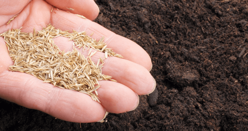 Plant Grass Seed On Hard Dirt