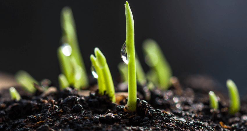 Protect Grass Seed From Heavy Rain