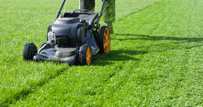 Weed and Feed Before or After Mow