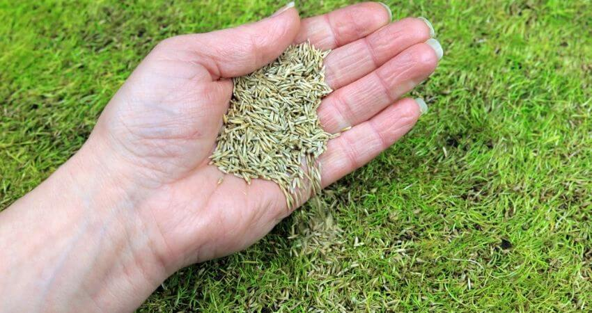 How to Plant Centipede Grass Seed
